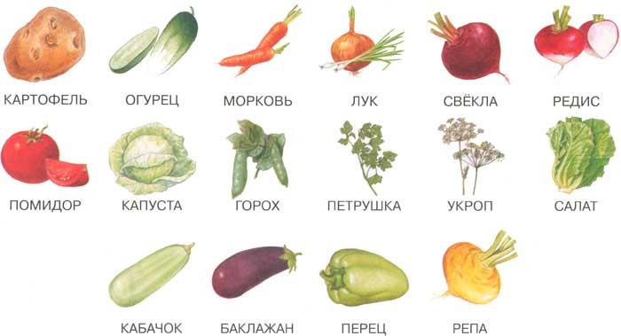 Экзотические фрукты и овощи их названия в картинках 5